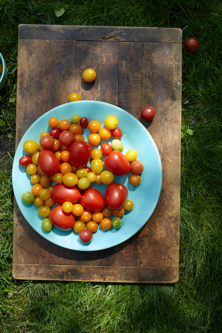 Marx_Food_photography_tomatoes_garden_sunshine_cherry